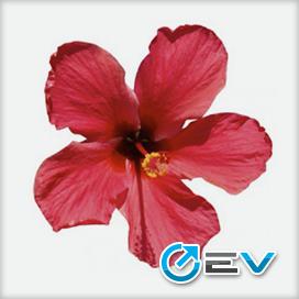Essência Flavor West - Hibiscus
