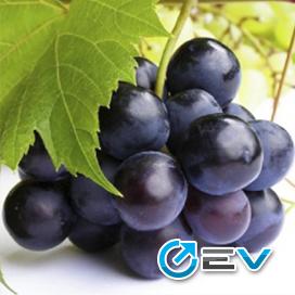 Essência Flavor West - Grape