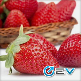 Essência TPA - Strawberry